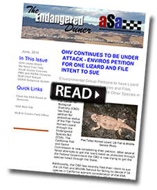 Cover of ASA's December 2014 Endangered Duner newsletter